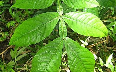 Green leaf love