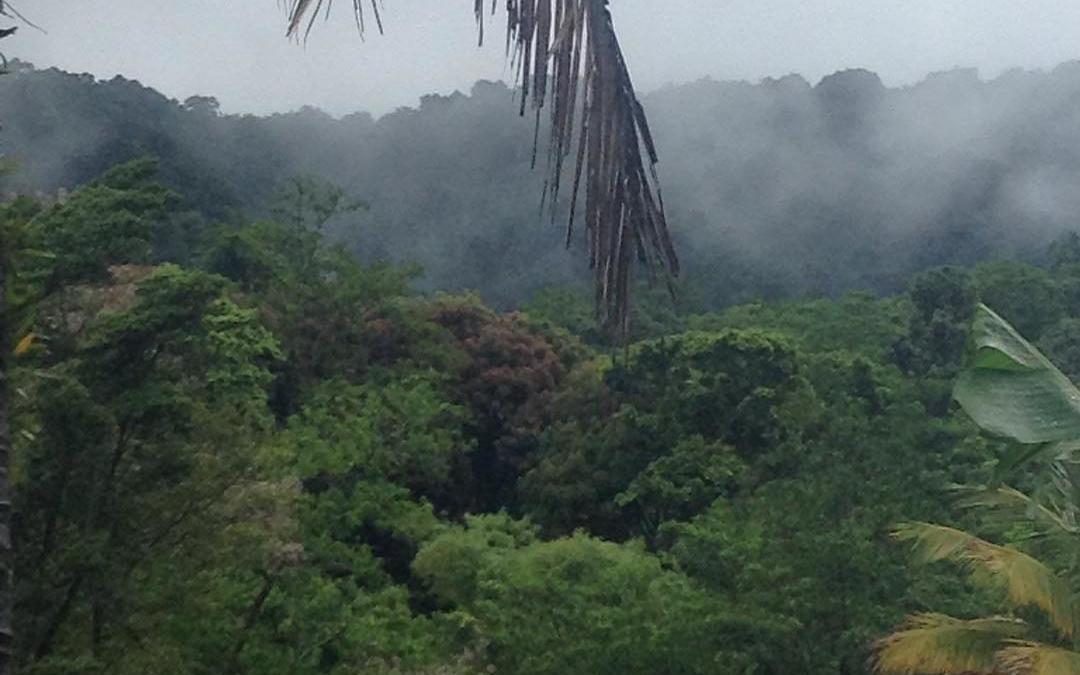 Misty Mountain Musing