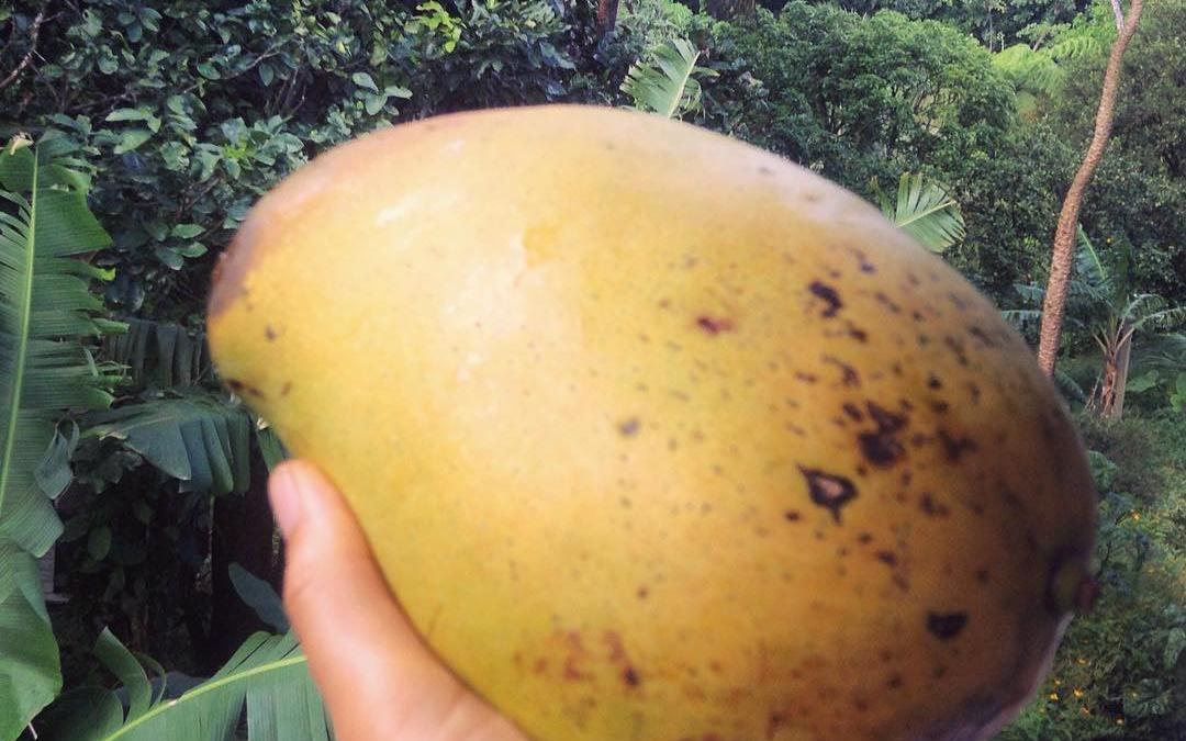 Mango Mania!