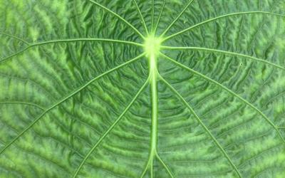 Universe in a Leaf