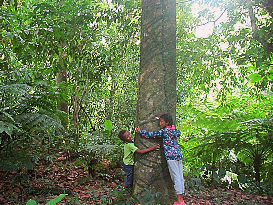 Tree hugging kids